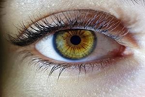 Importancia de la relación entre alimentación y vista